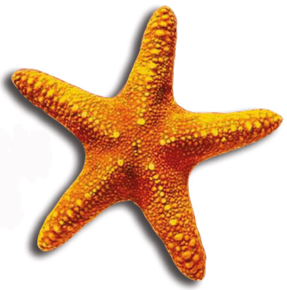 seastar water sports dive centre logo