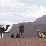 camels and bedouin in wadi rum jordan