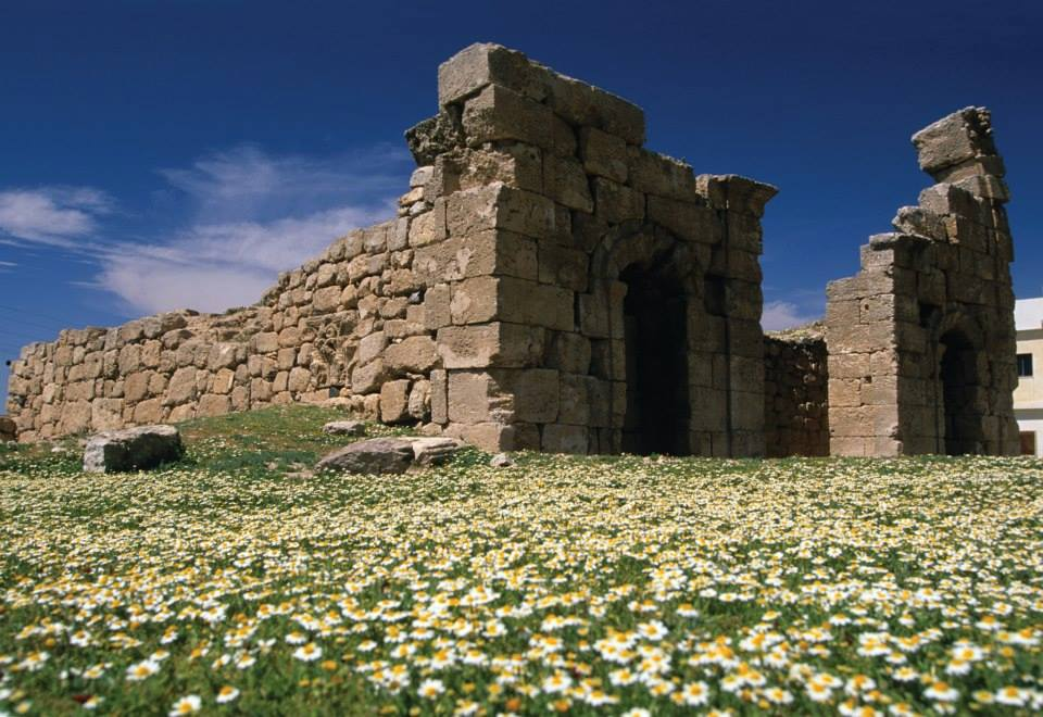 wild flowers at Qasr Azraq, Jordan