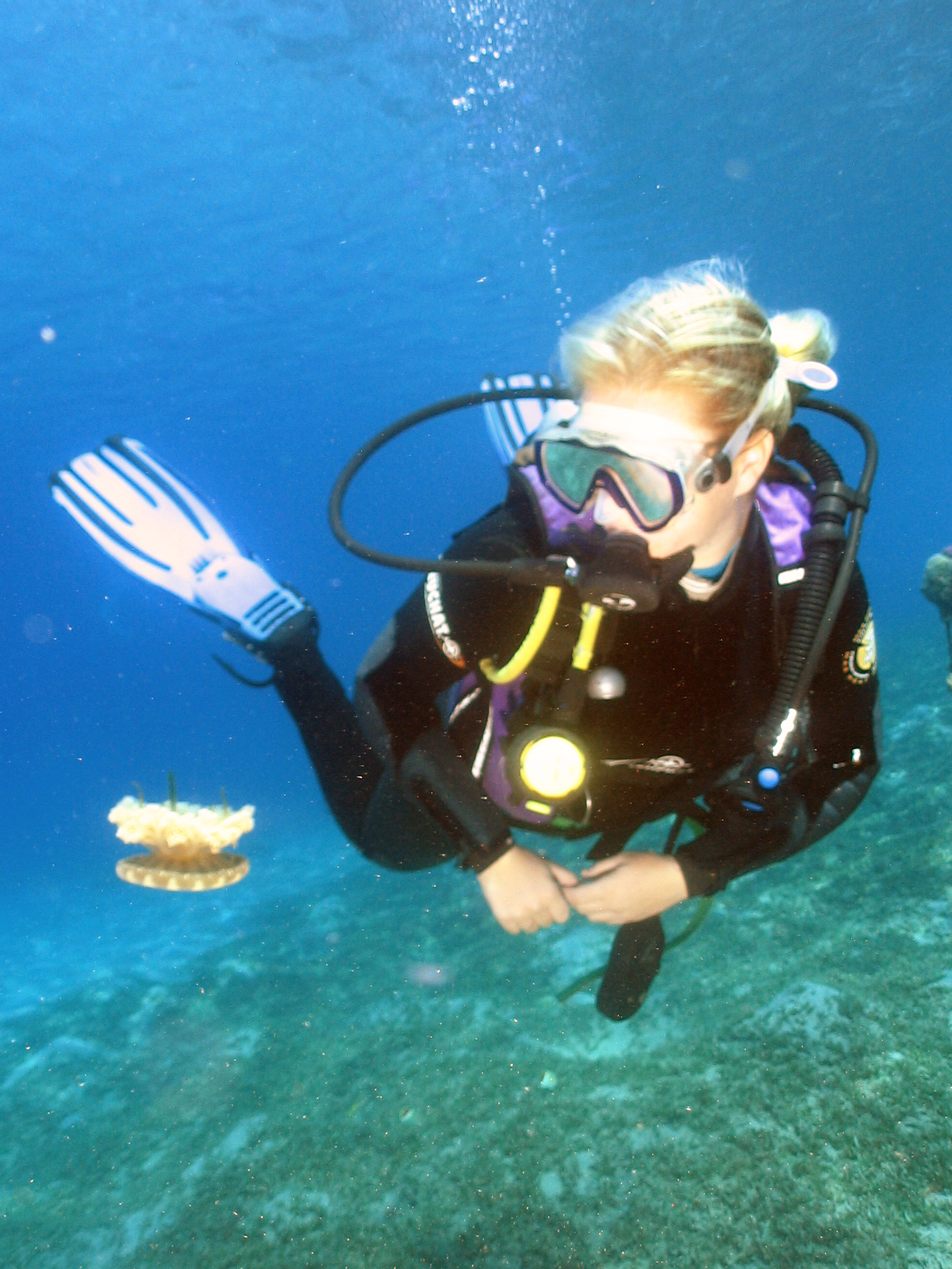 diver and jelly fish in aqaba jordan red sea